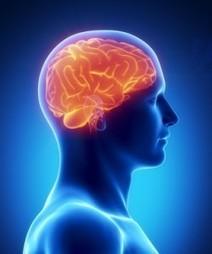 Meditation & Brain Changes: Current Research | Jon Lieff M.D. | Meditatie & de hersenen | Scoop.it