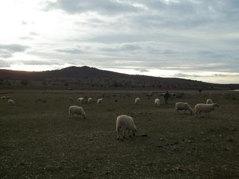Lechazo Charro: La huella de carbono en ganado ovino | Agua | Scoop.it
