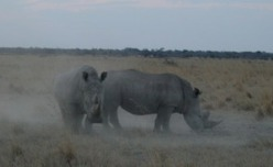 Africa: UN Conference Stresses Grave Need to Combat Wildlife Crime | Wildlife Trafficking: Who Does it? Allows it? | Scoop.it