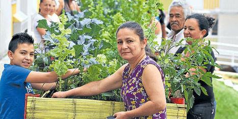 Vivienda y granjas urbanas para alejar la pobreza - Otras ciudades - El Tiempo | Regiones y territorios de Colombia | Scoop.it