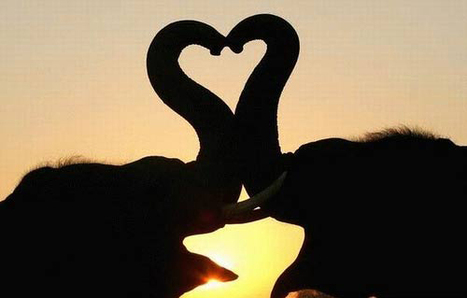 When animals fall in love2! elephants <3 | It's not just about us in this world! | Scoop.it