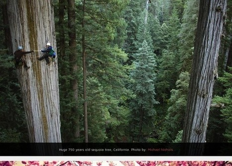 World's Most Beautiful Trees Photography | Leading edge of home based business, | Scoop.it