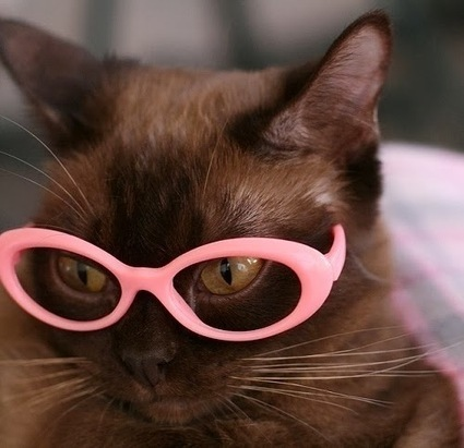 Daily Funny Animal Pictures: Black Cat Wearing Pink Glasses | Funny Animal Pictures | Scoop.it