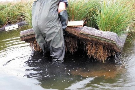 Floating wetlands change the tide on water cleanup | Sustainable Futures | Scoop.it