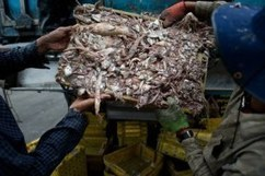 Exploitation claims hit Thai seafood exporter   Asian Labour Update   Scoop.it