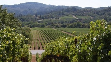 Wine regions oppose 'catastrophic' EU expansion plans | Vitabella Wine Daily Gossip | Scoop.it