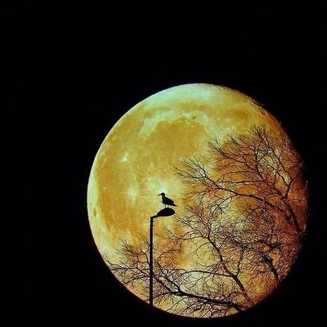 Luna llena ... | Reflejos | Scoop.it
