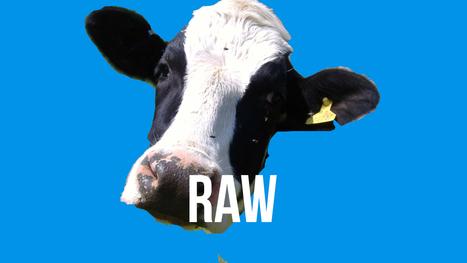PNN #103 Jury Nullification Victory 4 Raw Milk Farmer ‹ Peace ...   Raw Milk   Scoop.it