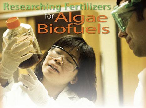 Researchers examining fertilizers for algae biofuels | algae biofuel | Scoop.it