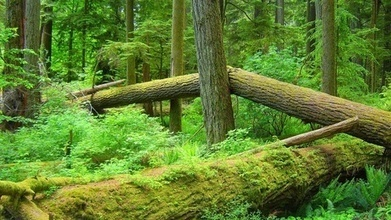 House Takes Up Proposals to Raise Revenue Through Logging | Timberland Investment | Scoop.it