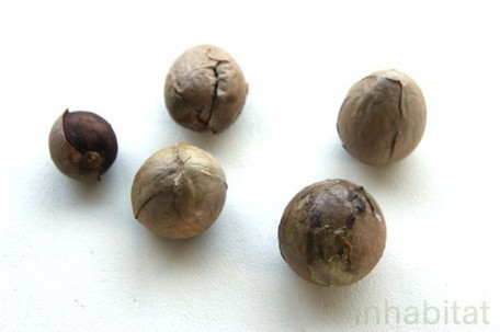 HOW TO: Grow an Avocado Tree from an Avocado Pit | Seeds and Their Growing Importance | Scoop.it