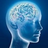 'Alto' e 'Basso'. Un nuovo studio rivoluziona le idee sul cervello - Diregiovani | Il corriere della positività | Scoop.it