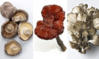 Could mushrooms be the cure for cancer? - The Guardian | Nutrition Dos and Don'ts | Scoop.it
