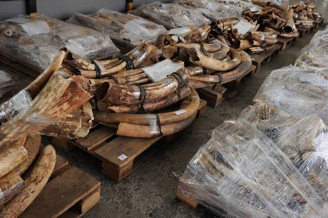 Why we must do more to stop wildlife crime | Wildlife Trafficking: Who Does it? Allows it? | Scoop.it