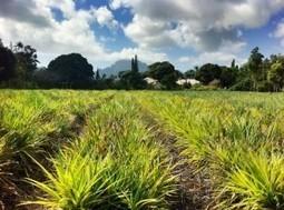 Pau Hana Friday for January 10 | Kauai The Garden Isle | Scoop.it