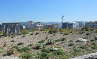 Sur les toits de Marseille | Toitures végétales & Biodiversité urbaine | Scoop.it
