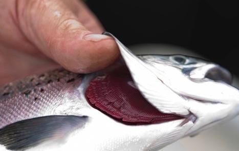 SAIC: Call for rapid diagnostics projects - Aquaculture Directory | Aquaculture Directory | Scoop.it