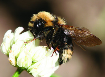 Bees' ability to forage decreases as air pollution increases | apiculture31 | Scoop.it