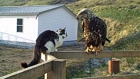 9 videos of cats meeting wildlife   MNN - Mother Nature Network   The Funniest Cats In The World!   Scoop.it