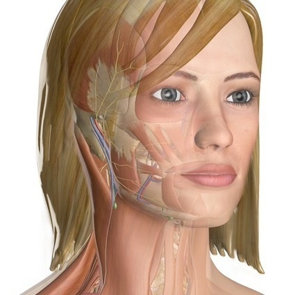 InnerBody.com | Your Interactive Guide to Human Anatomy | Science | Scoop.it
