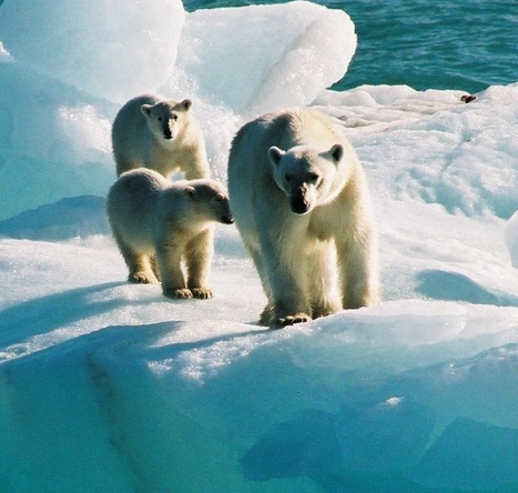 Groenland : 3 voiliers ayant un rapport avec le Finistère | Hurtigruten Arctique Antarctique | Scoop.it