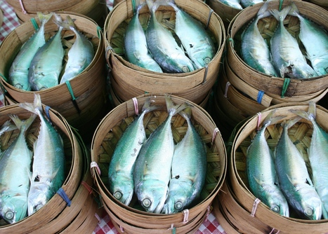 THAILAND: Thai fisheries under pressure | Viet Linh | Scoop.it