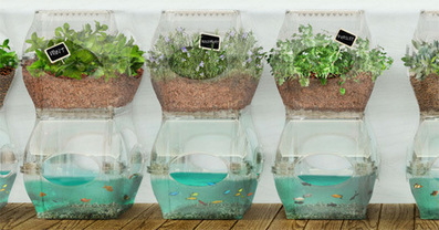 Urban Aquaponics System Grows Food Indoors Year-Round - Delightfully Scented | Vertical Farm - Food Factory | Scoop.it