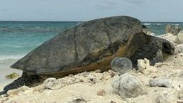 What are long term threats of plastic in our seas?   Sustain Our Earth   Scoop.it