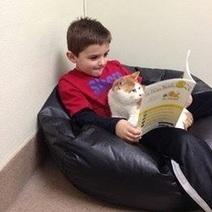 Aux Etats-Unis, des enfants font la lecture aux chats des refuges | CaniCatNews-actualité | Scoop.it