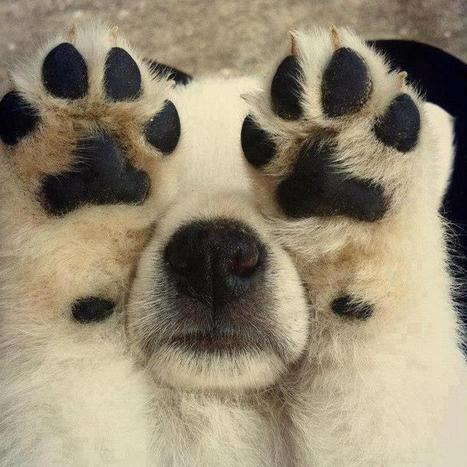 llbwwb: Todays Cuteness,for the dog lovers:)... | dog lovers | Scoop.it