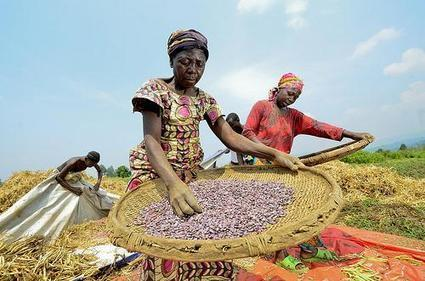 Well-functioning 'rules of the game' crucial for agricultural development | CGIAR Climate | Climate Smart Agriculture | Scoop.it