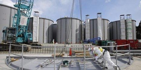 Pollution de Fukushima : la chaîne alimentaire touchée par la contamination | Japon : séisme, tsunami & conséquences | Scoop.it