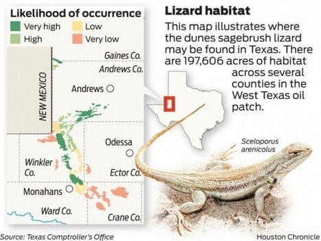 Lizard's fate hinges on oil and gas-related foundation | Dunes Sagebrush Lizard | Scoop.it