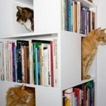 Quand la bibliothèque se fait aussi arbre à chat | BiblioLivre | Scoop.it