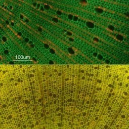 Seedling functional traits of tropical vs. cool-temperate trees | Erba Volant - Applied Plant Science | Scoop.it