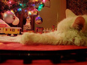 Bunny's Blog: APAW Offers Helpful Tips for Stress-free Holidays with Your Pets | Pet News | Scoop.it
