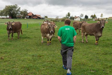 Suisse : Revenu agricole: Les paysans nettement moins payés en 2015 | Questions de développement ... | Scoop.it