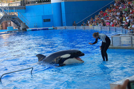 SeaWorld Again Tries to Counter Bad Publicity by Going after Health and Safety Investigator | All about water, the oceans, environmental issues | Scoop.it