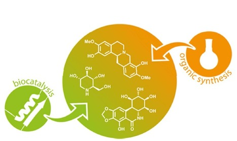 The role of biocatalysis in the asymmetric synthesis of alkaloids   Chemistry   Scoop.it