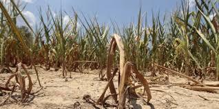 Le Maroc a-t-il retenu la leçon donnée par la nature ? - AgriMaroc | Agriculture et Alimentation méditerranéenne durable | Scoop.it