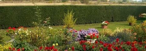Chelsea Fringe — a festival of flowers, gardens and gardening across London | Travel | Scoop.it