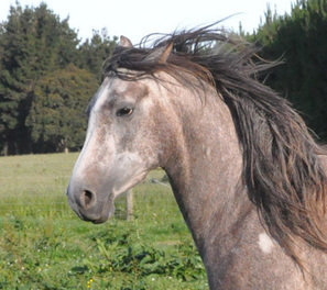Mares behaving badly - Horsetalk | Equine Reproduction | Scoop.it