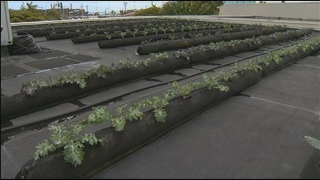 News You Can Use: Urban Rooftop Garden | Sustainable Urban Agriculture | Scoop.it