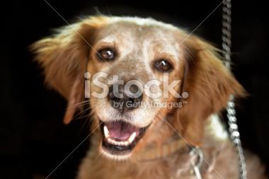 Assurance chien - quel type d'assurance choisir ? | Assurance chien animaux | Scoop.it