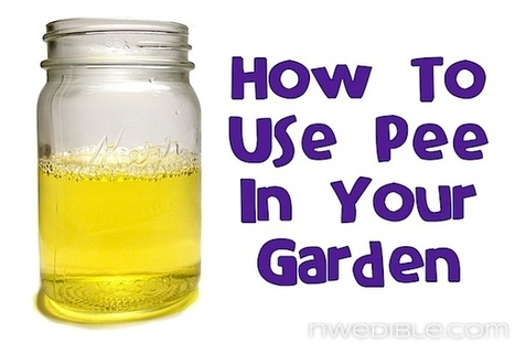 How To Use Pee In Your Garden   Sub Arctic Permaculture   Scoop.it