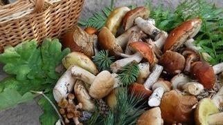 Les champignons / Conseils de Chefs / Chefs - Terroirs de chefs | Gastronomie Française 2.0 | Scoop.it