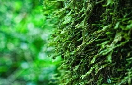Bonn climate talks tackle emissions verification stumbling block | Climate Smart Agriculture | Scoop.it