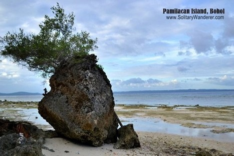 Pamilacan Island, Bohol | Philippine Travel | Scoop.it