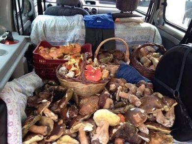 Mushroom madness in the Maremma   Italia Mia   Scoop.it