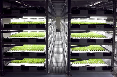 The world's first robot-run farm will harvest 30,000 heads of lettuce daily | Vertical Farm - Food Factory | Scoop.it